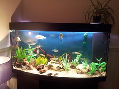 My aquarium by Xbeckie boox, on Flickr