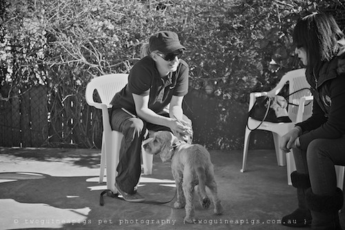 Amy in consultation,  twoguineapigs pet photography at Dogue's Winter Sale 2011 in Manly