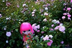 Lost in the secret garden............♥..
