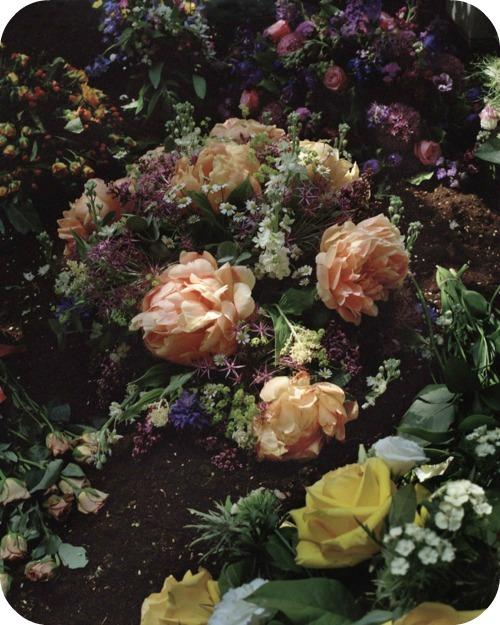 dark pretty roses flowerymessround