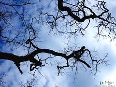 Natural Art I (Ridwan Adid Rupon) Tags: blue sky tree art nature intense peace artistic silence rupon ridwan adid