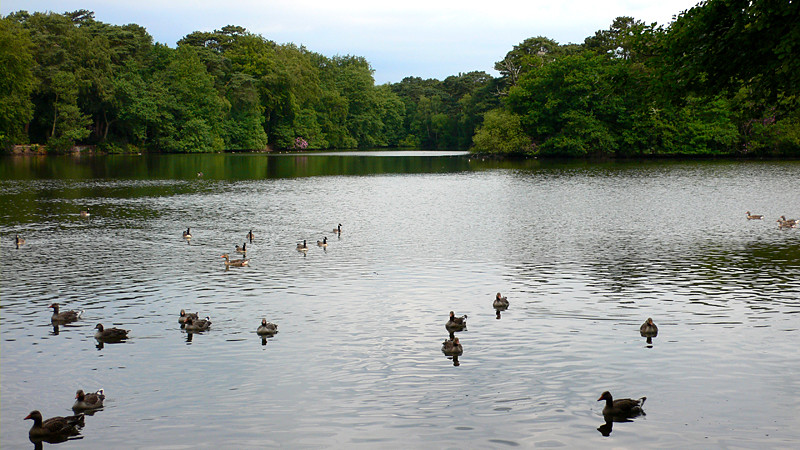 Hartsholme Lake