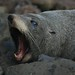Essa ai e uma foca...