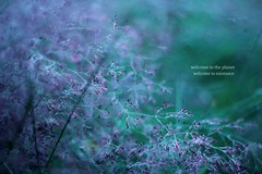 12/100 (AmyJanelle) Tags: blue green field lyrics pretty purple bokeh quote welcome purpleflowers