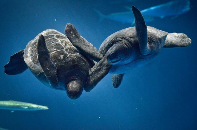 148_2 Monterey Bay Aquarium