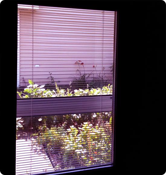 Garden in the heat