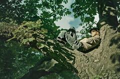 Climbing tree (Sebastian Troedson) Tags: park summer man tree green leaves evening nikon gothenburg relaxing climbing d7000