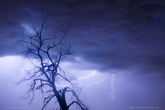 Tree Silhouette and Lightning 29 (Striking Photography by Bo Insogna) Tags: trees sky tree nature rain weather silhouette clouds skyscape landscape photography landscapes colorado lafayette forsale longmont branches wallart bluesky boulder monsoon co louisville lightning lightening striking storms lightningstrike thunderstorms lighning timedexposure lightningbolts bouldercounty strikingphotography fineartprintsforsale jamesboinsogna thelightningman strikingimages unusuallightning lightningboltpictures canvasartforsale lightningweatherstockimages
