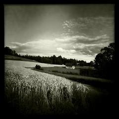 Swiss Fields (whispaws) Tags: cameraphone bw field landscape switzerland countryside grain utata johns iphone uetikonamsee whispaws hipstamatic claunch72monochrome tw274