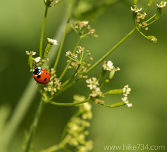 "Ladybug • <a style=""font-size:0.8em;"" href=""http://www.flickr.com/photos/63501323@N07/5967080001/"" target=""_blank"">View on Flickr</a>"
