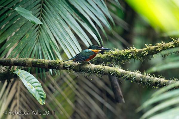 RYALE_Amazon-59