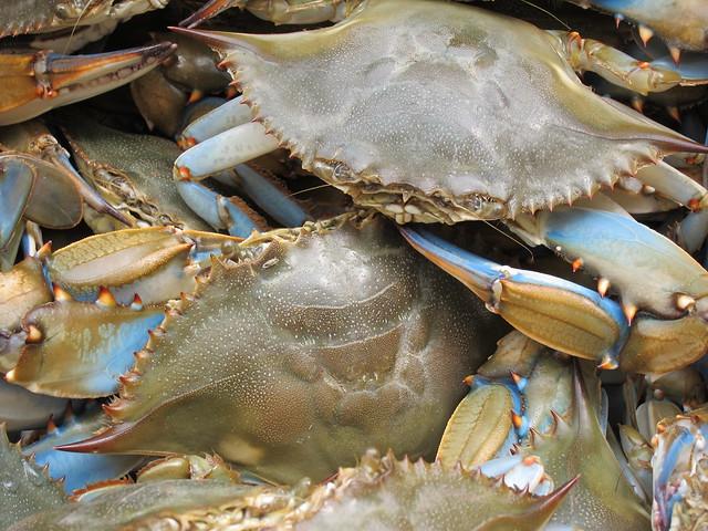 Crabbing et al 029