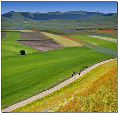 Walking among the colours (Nespyxel) Tags: road nature field landscape strada colours natura campo monte patchwork colori umbria palette castelluccio tavolozza vettore parconazionale montisibillini colorphotoaward piangrande nespyxel stefanoscarselli