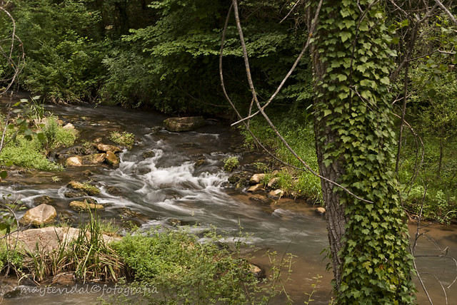 Remolinos en el rio Gallo