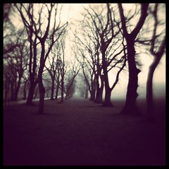 My Neck Of The Woods (Comfortable Corners) Tags: trees blur comfortable square sticks woods path infinity fear meadows spooky lane squareformat brannan end vignette corners iphoneography instagramapp uploaded:by=instagram comfortablecorners
