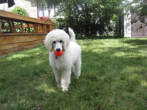 My new ball. 002