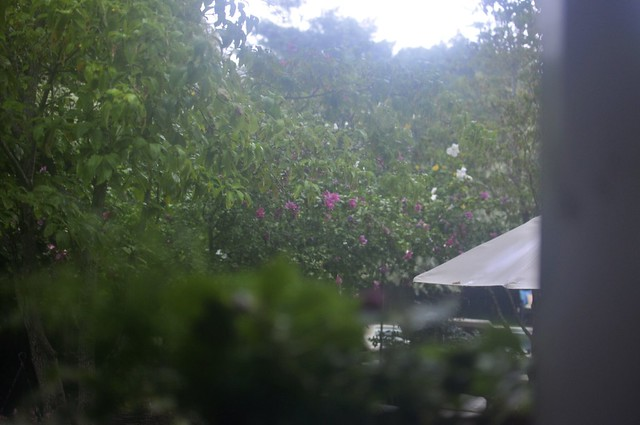 backyard in the rain