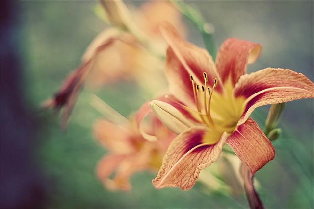 IMAGE: http://farm7.static.flickr.com/6136/5990812032_8af612cbd4_z.jpg