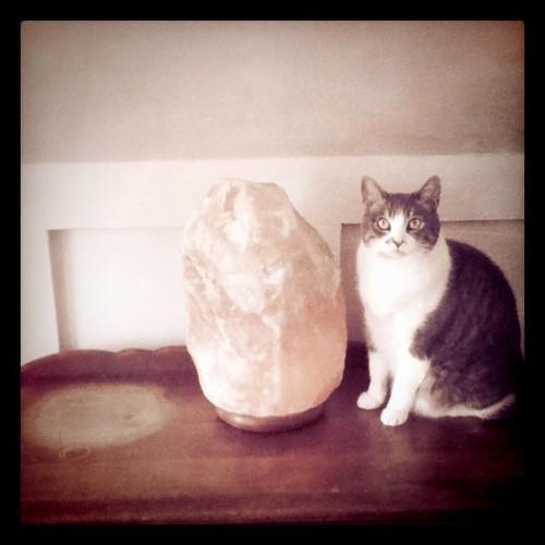50 lb Salt Lamp