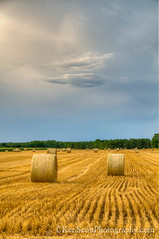 Straw Rollups ... (Ken Scott) Tags: summer usa michigan harvest july hdr leelanau rolledstraw kenscottphotography kenscottphotographycom