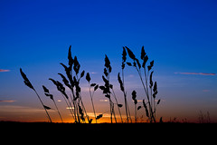 blue sky (Heibr) Tags: blue sunset sky orange plants plant black color nature night canon landscape iceland clauds 7d gras svart himinn slsetur blr heibr