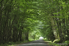 Down a French road I will go (keithhull) Tags: road trees france tunnel yonne explorewinnersoftheworld seeninexplore982011200