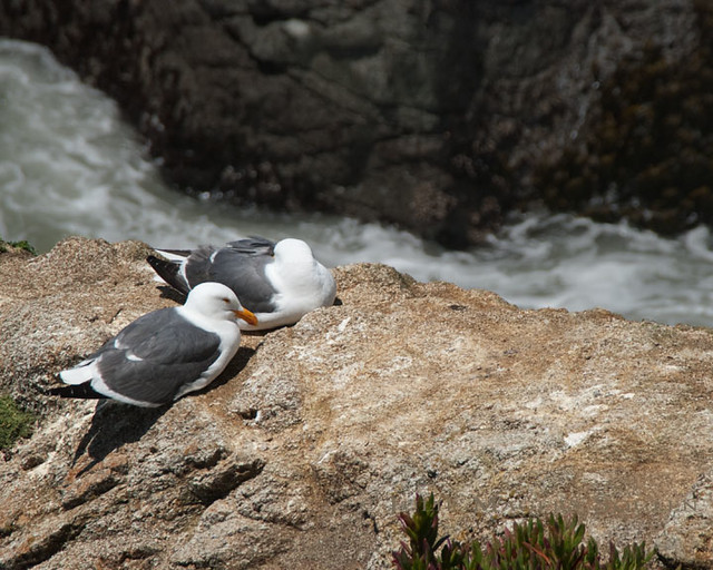 Two seagulls rest on a rock next to the turbulent water of the Pacific Ocean.