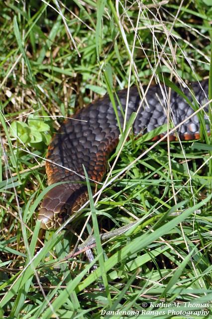 Season's first snake