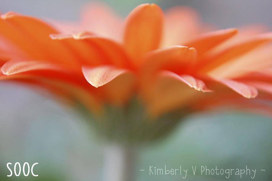orange1-sooc