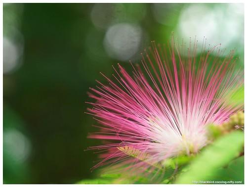 Flowers 110709 #01
