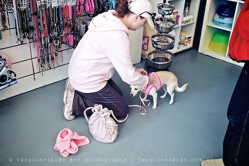 Trying out, twoguineapigs pet photography at Dogue's Winter Sale 2011 in Manly
