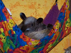 Ori in the little hammock