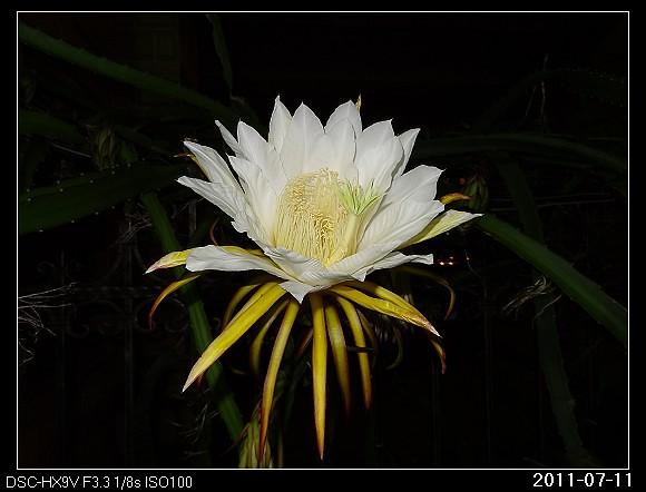 20110711F1曇花一現