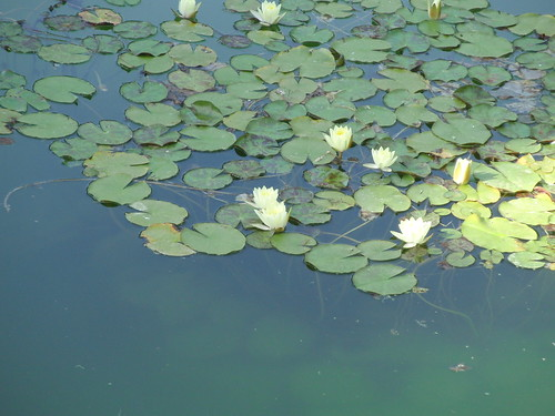 estanque alhambra
