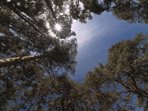 Entre el cielo y el suelo by Gallo Quirico