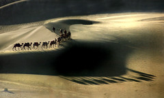 8011 Shadows of camels--The Gobi Desert . China (ngchongkin) Tags: china bravo desert camel harmony rs soe breathtaking myfave nationalgeographic musictomyeyes autofocus finegold goldheart thegalaxy beautifulshot peaceaward colorphotoaward flickrhearts flickrbronzeaward heartawards artistsoftheyear platinumheartawards earthasia thebestofday gnneniyisi beautifulaward thebestshot highqualityimages spiritofphotography discoveryphotos qualifiedmembersonly topaward photographerparadise artofimages angelawards themasterphotographer creativeyeuniverse visionaryartsgallery contactaward bestcapturesaoi thebestcapturesaoi sailsevenseas dreamsilldream pegasusaward flickrsgottalent flickrssuperstartalent bestpeopleschoice paragongallery mygearandme mygearandmepremium artwithoutend gigilivornosfriends wowbrilliant betterthangoodlevel2 goldstarawardlevel1 goldstarawardlevel2 ringexcellence dblringexcellence flickrbronzetrophy photographyforrecreationgoldaward chariotsofartists photographyforrecreationemeraldaward photographyforrecreationsilveraward photographyforrecreationbronzeaward photographyforrecreationsapphireaward photographyforrecreationdiamondaward photohobbylevel1 kingsandqueensofthebestofday thethreeangelslevel1 freeadminworld lforlightislife chariotsofartistslevel2 vivalavidalevel1 ayrphotoswelcome