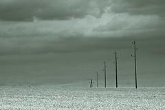 Americana #2 (TheOtherPerspective78) Tags: sky field birds clouds austria feld pole electricity americana poles mast lower vögel strom niederösterreich korn waldviertel kornfeld weizen weinviertel masten ackerbau