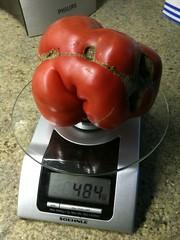Mortgage lifter tomato Grootste tomaat die ik ooit gekweekt heb!