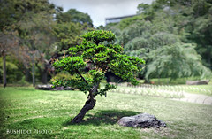 Japanese Tree Bokehrama 2 (Bushido Photo) Tags: japan nikon 14 85mm stitched panorma d700 bokehrama bokerama bushidophoto