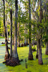 IMG_1248-Edit-1024.jpg (princer7) Tags: trees sc heron nature gardens america john river garden painting movie landscape for james flora war artist rice native turtle thing wildlife ashley south united models alligator places before historic charleston ibis exotic civil national swamp plantation otter horror carolina magnolia cypress register states waterfowl wes oldest craven named cultivation visited drayton audubon specimens plantations reservior ornithologist collected plantings as of