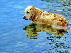 Wet dog (markb120) Tags: blue sea dog reflection water pool yellow sad greece ellada kamena vourla