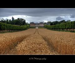 Les pis mrs (Alexis.D) Tags: france castle champs arbres chateau nuages region hdr murs thoiry bl parisienne haie yvelines photomatix