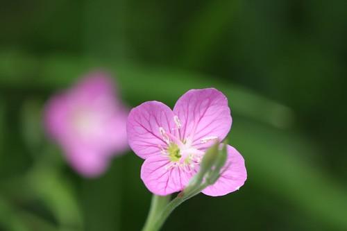 かわいい! / Pretty flower