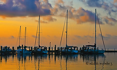 Yellow Morning (Eduardo Muriedas) Tags: sea sky usa reflection water sunrise canon reflections eos pier muelle mar dock agua texas amanecer cielo aurora reflejo aquatic reflejos gulfofmxico alborada acutico salidadelsol drsena 40d allrightsreserved golfodemxico atracadero canoneos40d canon40d eduardomuriedas