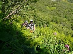 Un chemin luxuriant du col de Basmont au col de l'Arc 022