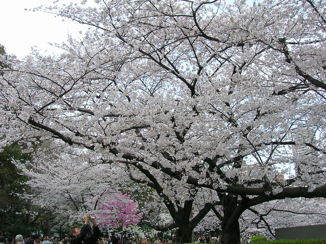 d7-19-ueno-park