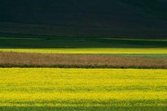 della serie … UNA TAVOLOZZA DI COLORI SULLA PIANA ... n. 12 (Maria Grazia Marrulli) Tags: dellaserie…unatavolozzadicolorisullapiana paesaggio landscape paysage paisaje paesaggicampestri natura vegetazione campi graminacee fiori fleurs flowers fioritura colori giallo yellow jaune amarillo rosa verde green vert minimalismo geometrie citazione fratellosolesorellaluna pianadicastelluccio castellucciodinorcia norcia perugia umbria italia geometriegeometry culturafotografica allegrisinasceosidiventa vacanza vacation vacances devacaciones viaggio travel vojage