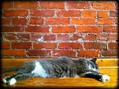 22/365: Flop (riekhavoc) Tags: hot brick wall cat robot 365 flopped 36522