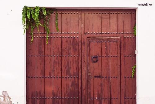 206- 365... La puerta y la hiedra