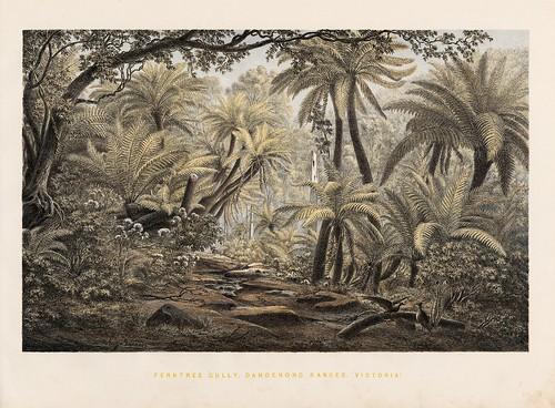 Ferntree Gully, Dandenong Ranges (Victoria)